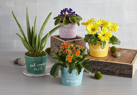 210902-FlowersPlants-PlantsGarden-TopNav-580x400.jpg