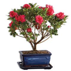 TreesWreaths-Bonsai-Siloed.jpg
