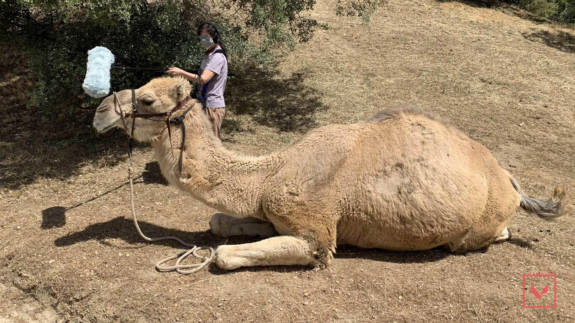 Grabando el sonido de un camello. Fuente: Riot Games