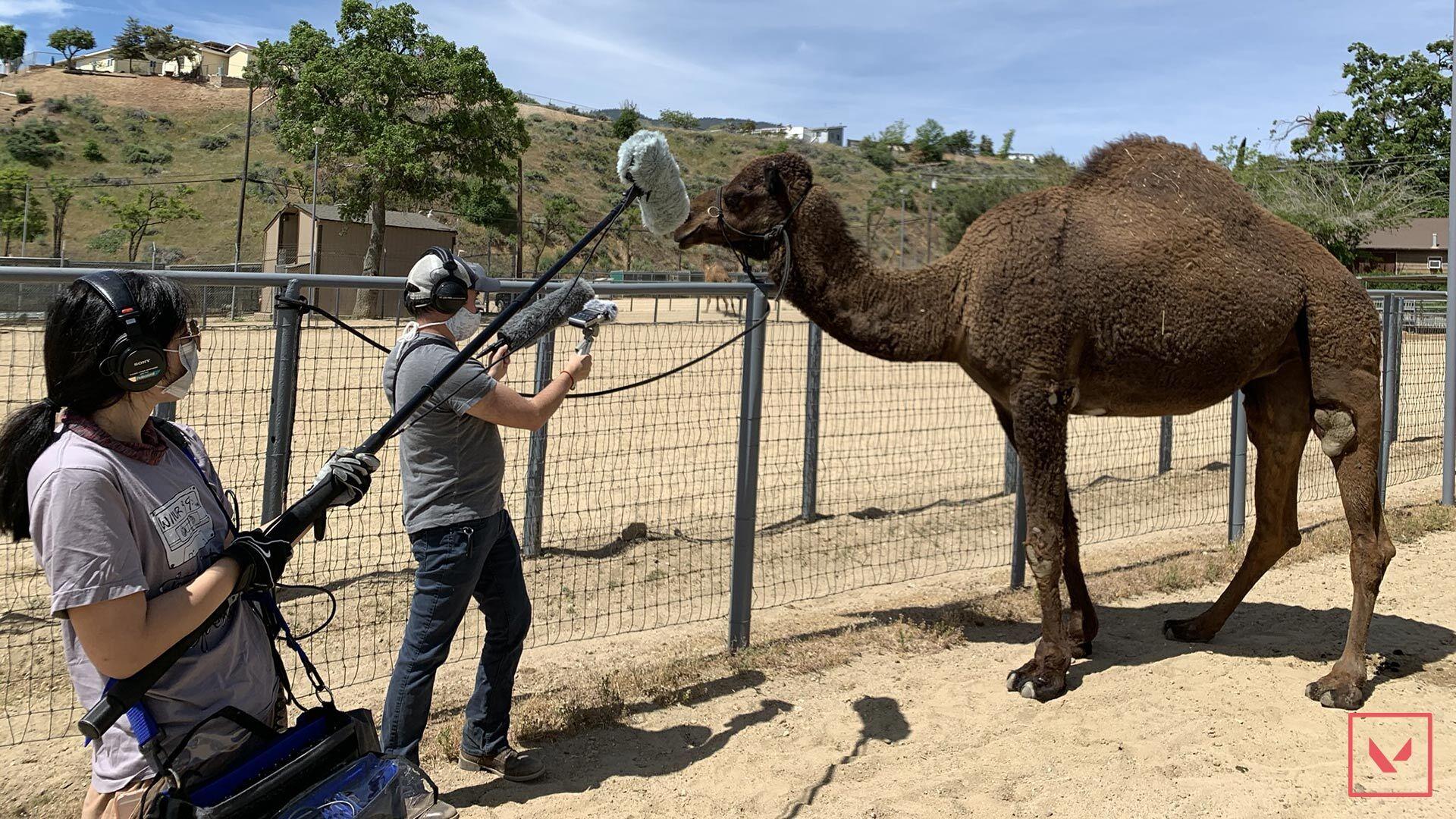 Updated_Camel_004.jpg