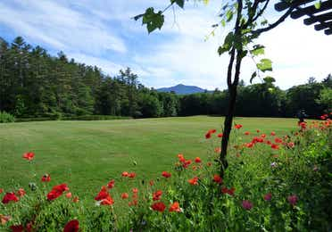 An open field with flowers and trees near Brownsville, Vermont.