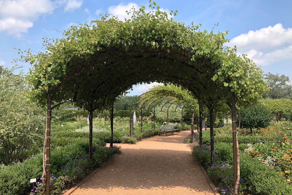 A gravel walkway with a covered trellis in a garden.