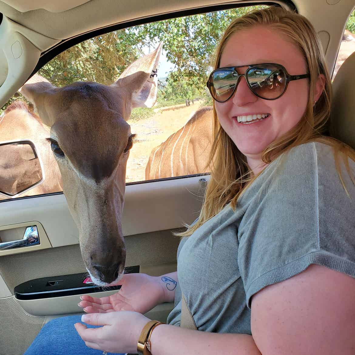 Kristen Connelly, assistant manager of guest engagement at Hill Country Resort, sits in her vehicle wearing a grey shirt and brown sunglasses while the safari animals pop their head through the passenger window to receive food.
