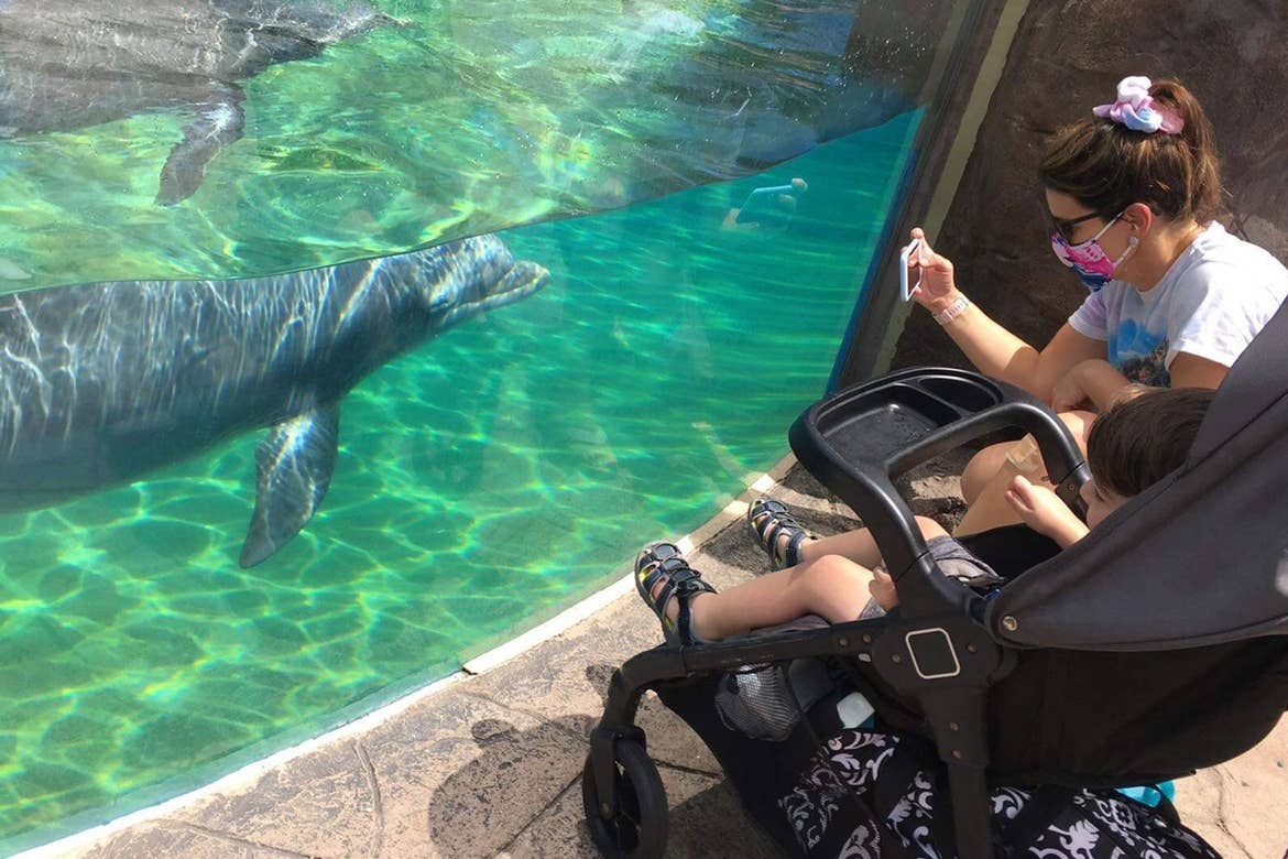 Jennifer and Dakota are observing the dolphins in their aquarium.
