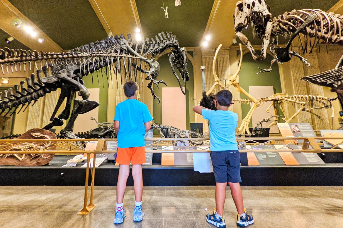 Two young boys look at dinosaur fossil displays.