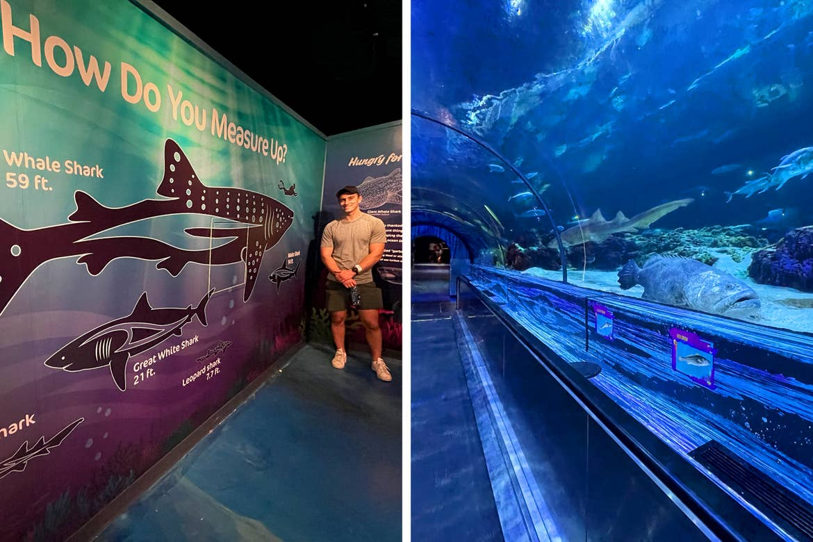 Left: A Caucasian male wearing a grey t-shirt, black cap and grey shorts stands near an infographic about sharks in SeaWorld Orlando. Right: A tunnel through an aquarium enclosure with a conveyor belt.