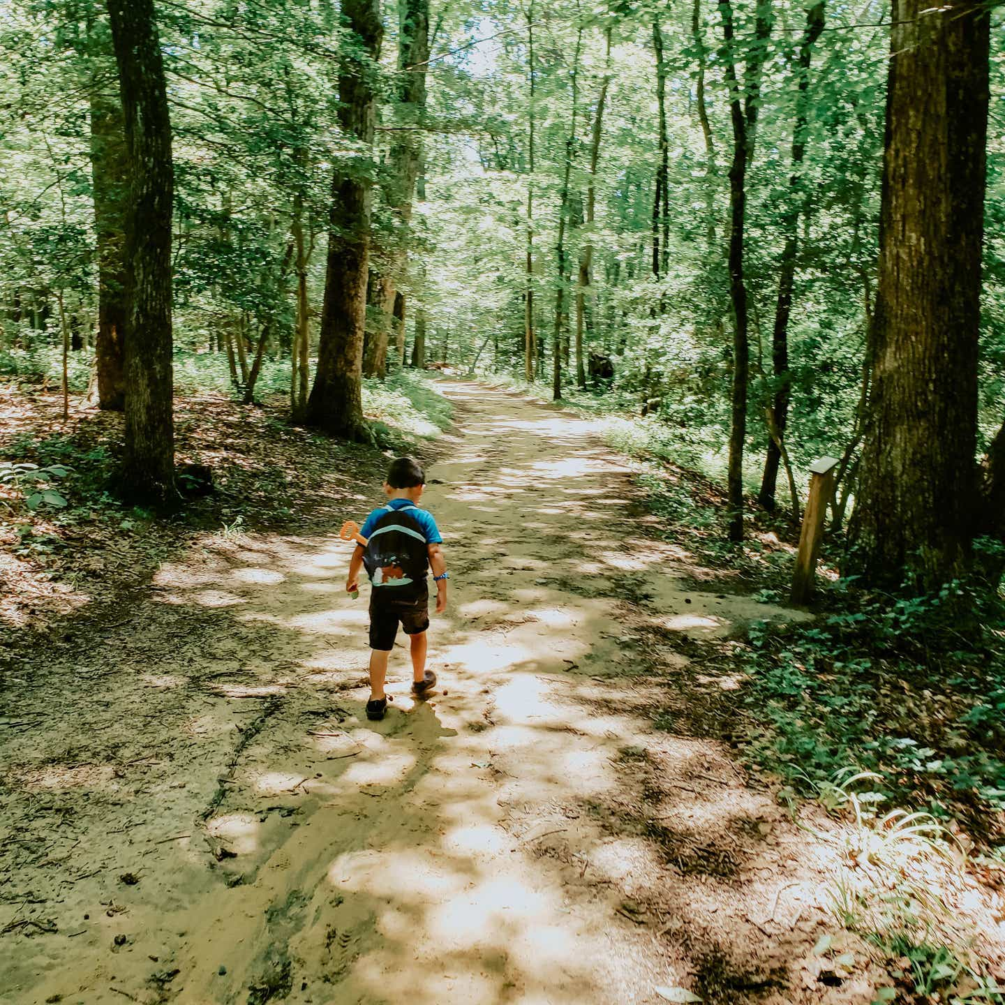 Angelica's son hiking through a wooded nature trail with his backpack on.