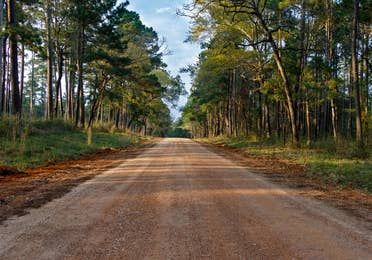 Sam Houston National Forest path near Piney Shores Resort in Conroe, Texas.
