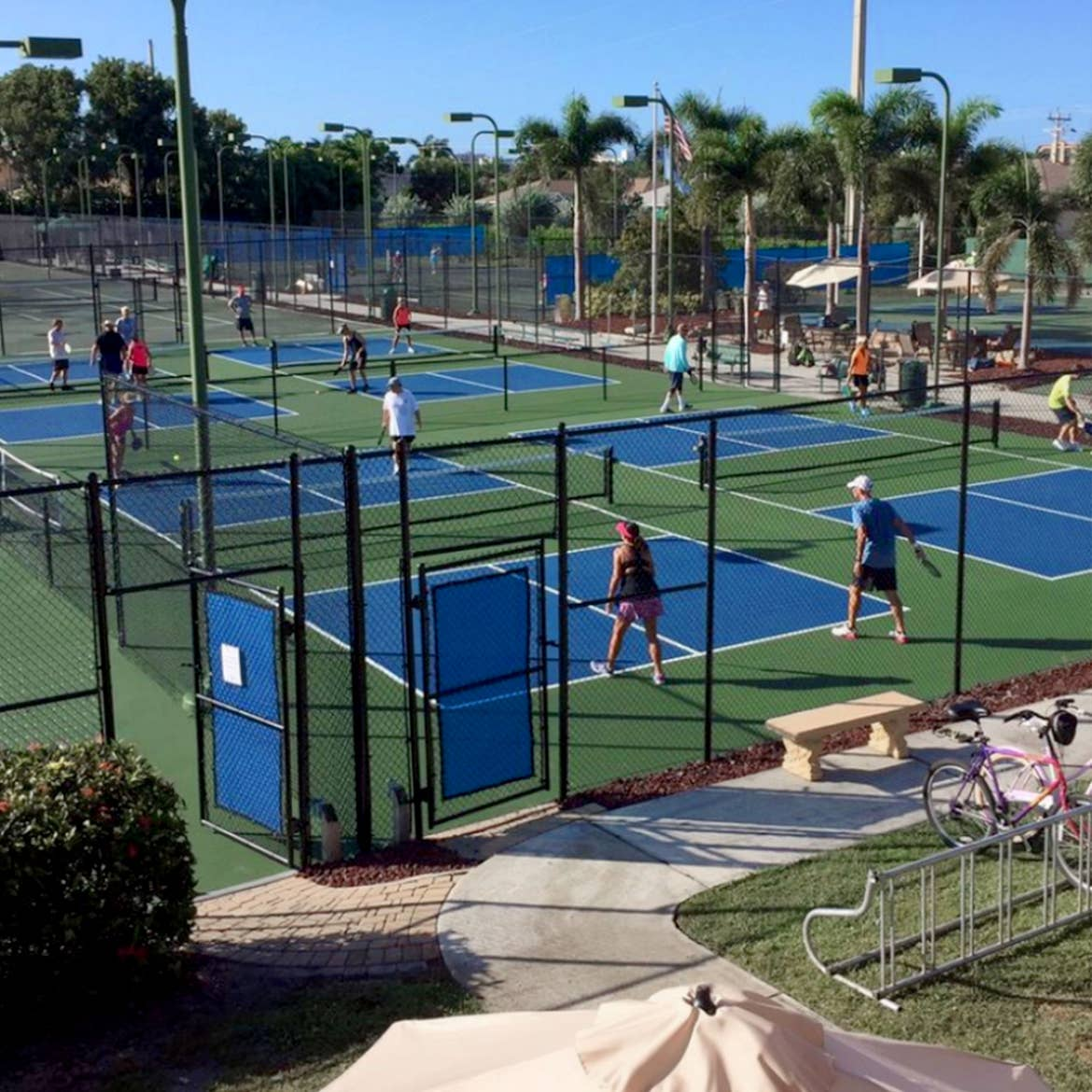 Multiple pickleball courts filled with players under a blue sky and surrounded by palm trees.