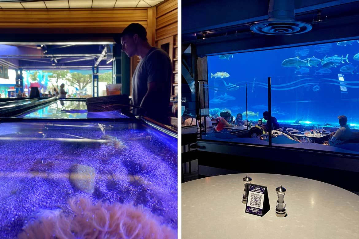 Left: A Caucasian male wearing a grey t-shirt, black cap and grey shorts stands near an aquarium indoors. Right: A restaurant interior with the view of its surrounding aquarium and other dining guests protected with plexiglass panels.