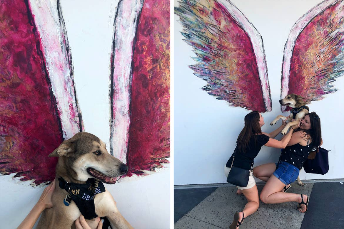 Left: A dog sits along a white wall with painted, red angel wings. Right: Two caucasian women struggle to hold up a dog near a white wall with painted, red angel wings.