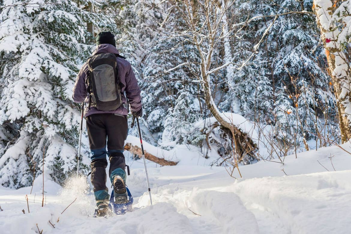 A guest snowshoeing through a snow-clad forest.