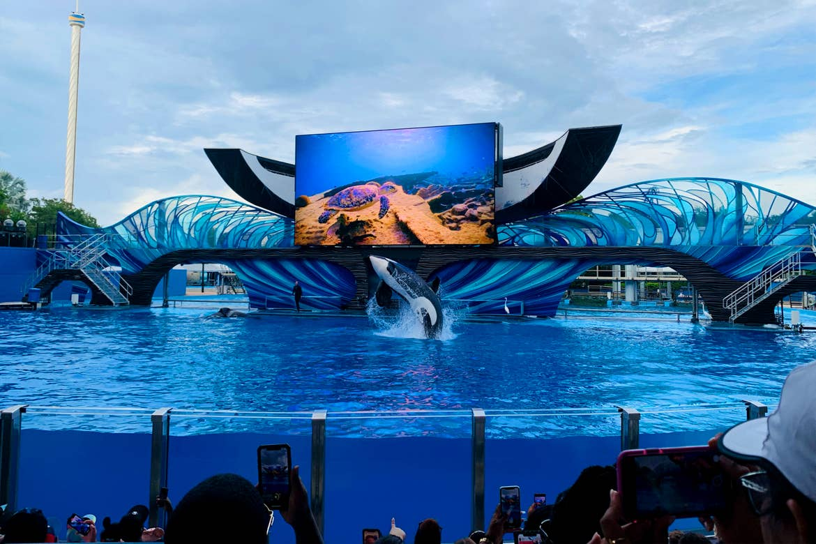 A stage shaped like an orca tail-fin with an LED panel displaying the ocean floor appears behind a live orca whale as it emerges from the water of a transparent water tank.