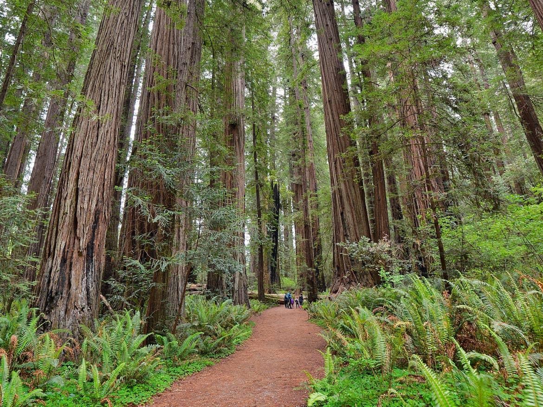 Redwoods National Park in California