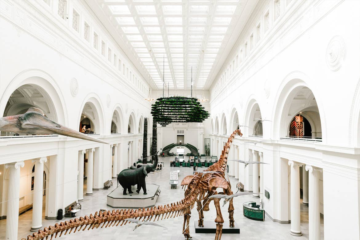 A large museum hall with dinosaur bones, elephants and various displays of artifacts.