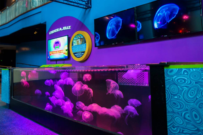 An indoor jellyfish tank.