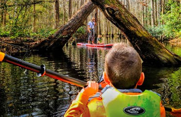 A young boy wearing a neon green life jacket on a kayak holds a paddle and looks towards two trees criss-crossed over the river.