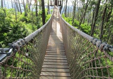 Treetop Skywalk at Anakeesta Theme Park at Gatlinburg, Tennessee