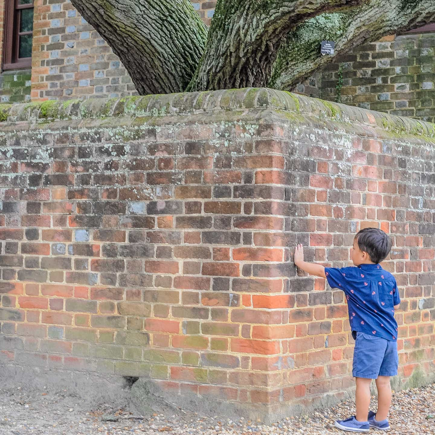 Angelica's son putting his hand on a historic wall in Williamsburg, Virginia.