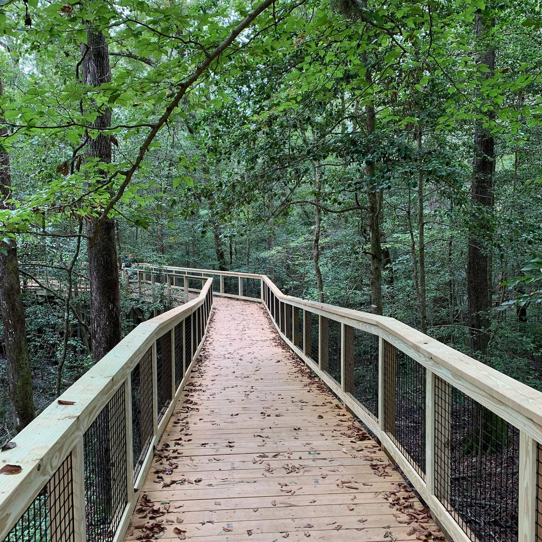 A bridge trail at Congaree National Park.