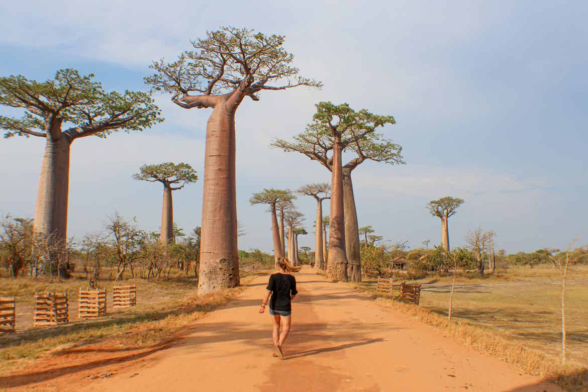 Featured Contributor, Ashlyn George, walks past some Boabab trees in Madagascar.
