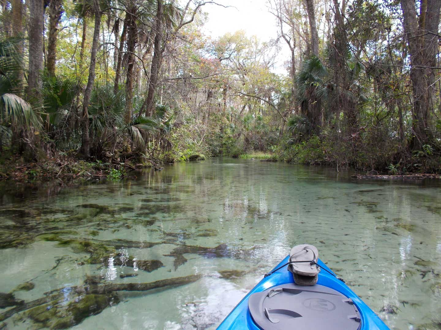 Kayak in the water at Florida's Wekiwa Springs