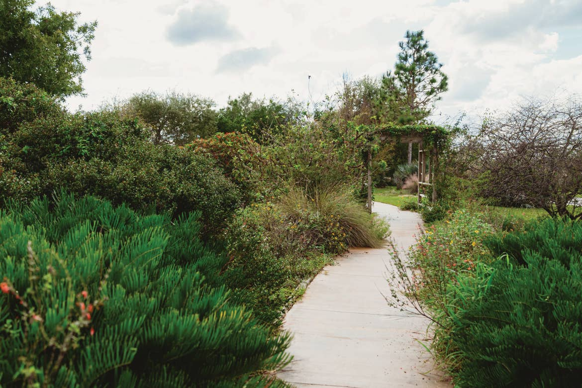 Walking path surrounded by plant life at Florida's Lake Louisa State Park