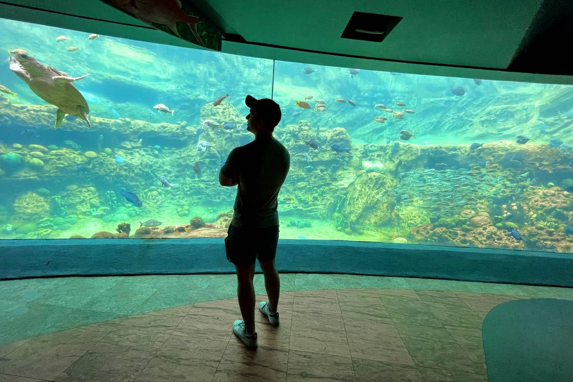 A Caucasian male wearing a grey t-shirt, black cap and grey shorts faces an aquarium with various sea creatures in SeaWorld Orlando.