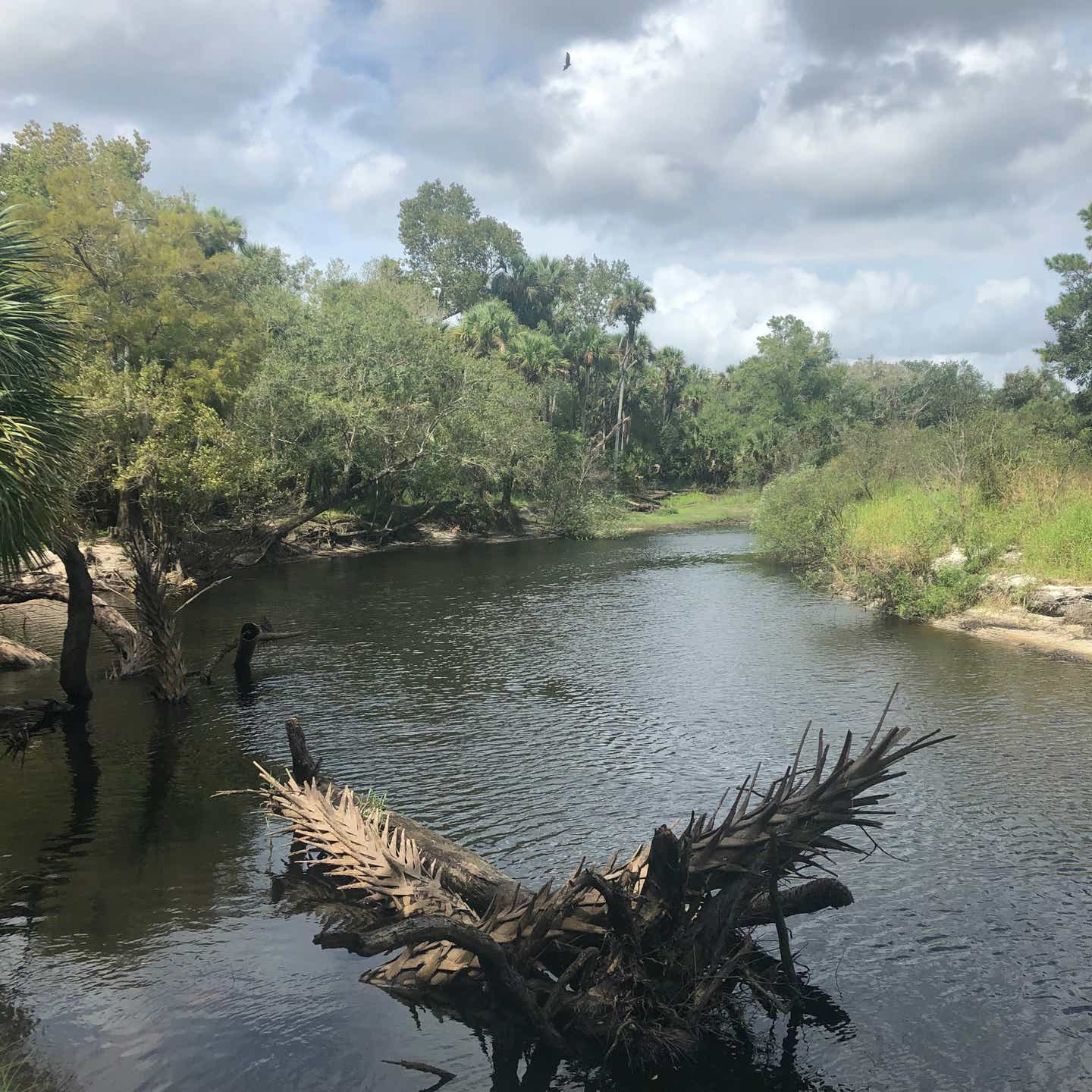 River view at Little Econ State Forest in Orlando, Florida.