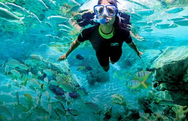A woman snorkels among the aquatic life wearing a wetsuit.