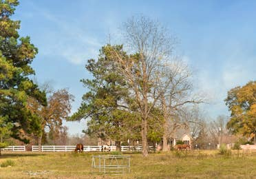 Fenced in area with horses roaming at Piney Shores Resort in Conroe, Texas