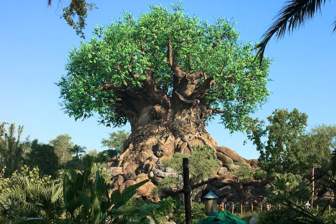 The 'Tree of Life' stands in the center of Disney's Animal Kingdom Theme Park with green leaves and carvings of animals at Walt Disney World Resort.