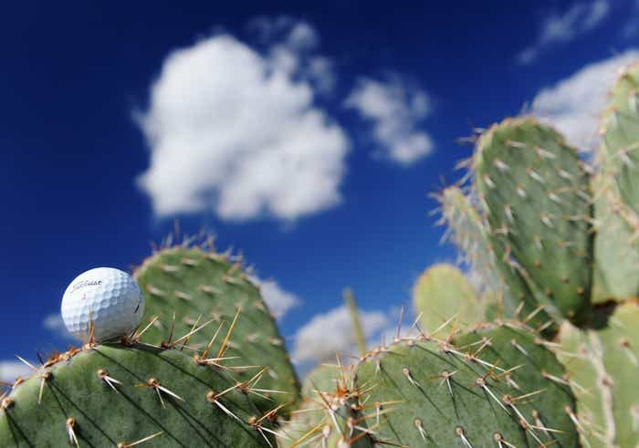 A Titleist golf ball sitting on a cactus leaf with clouds in the background.