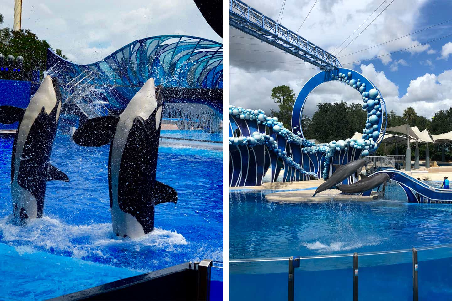 Left: Two orcas emerge from the water in a performance with Trainers. Right: Two dolphins emerge from the water in a performance with Trainers.