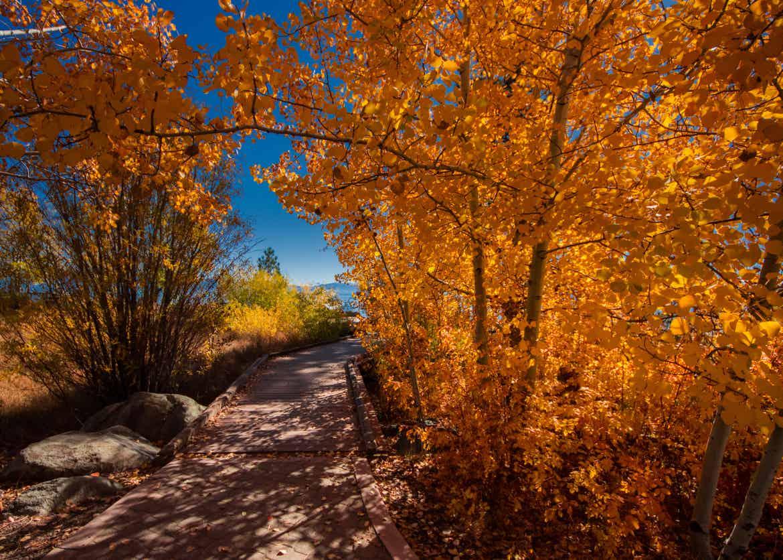 Tahoe path