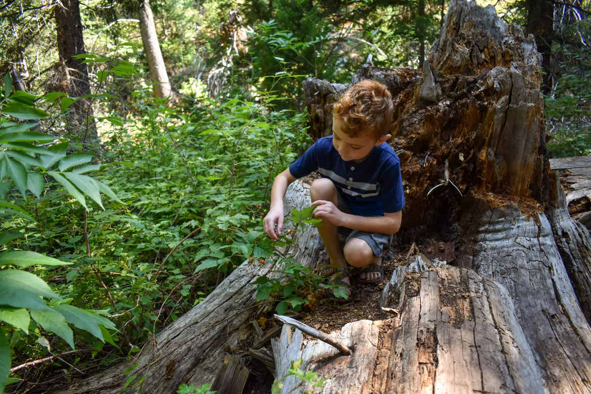 Jessica's son sitting on a fall tree limb examining berries on a hike