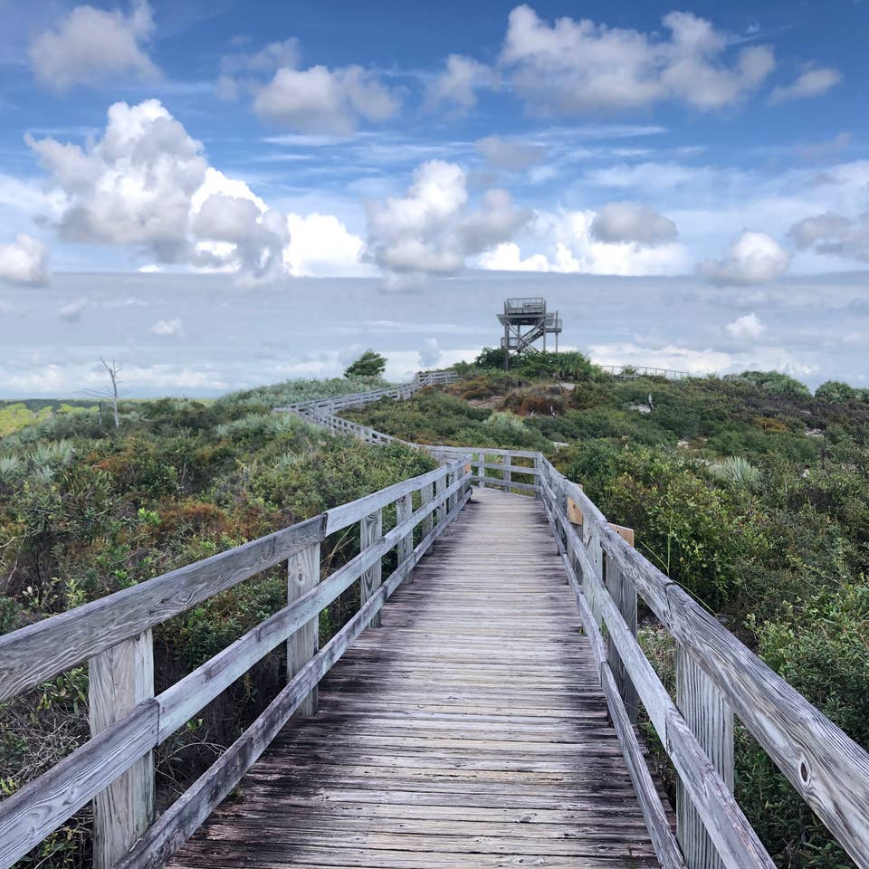 Pathway surrounded by lush greenery at Jonathan Dickinson State Park in Hobe Sound, Florida.