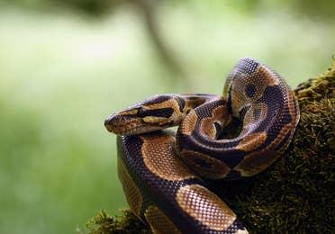 Image of a captive snake at Discovery World near Lake Geneva Resort, Lake Geneva, WI.