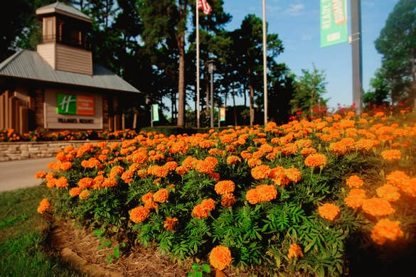 An entrance sign for Holiday Inn Club vacations surrounded by orange flowers.