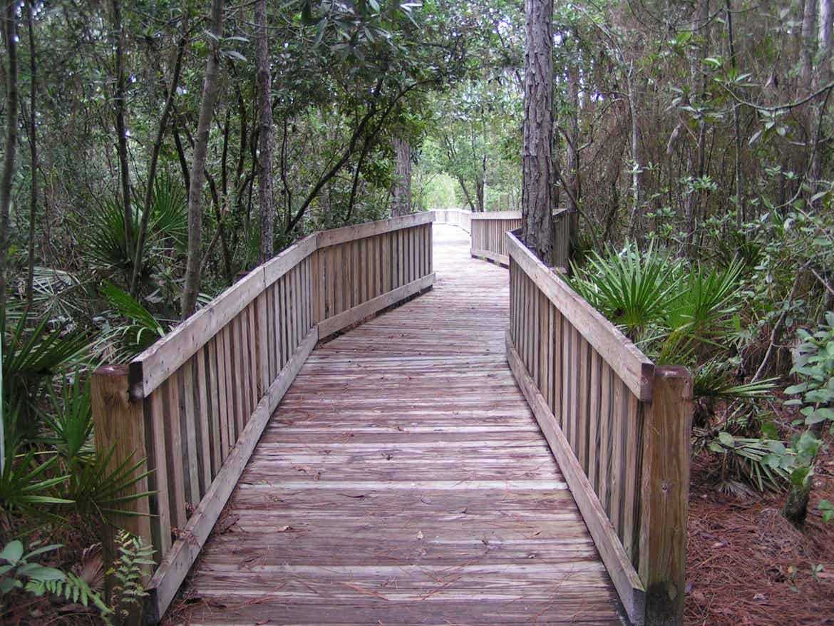 Wooden walking path through a nature preserve