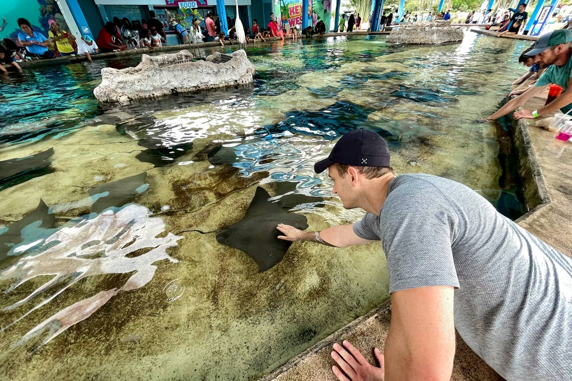 A Caucasian man wearing a dark baseball cap and grey t-shirt extends his hand into the tank full of water containing stingrays in a touching pool at SeaWorld Orlando.
