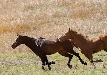 A pack of horses running through a field