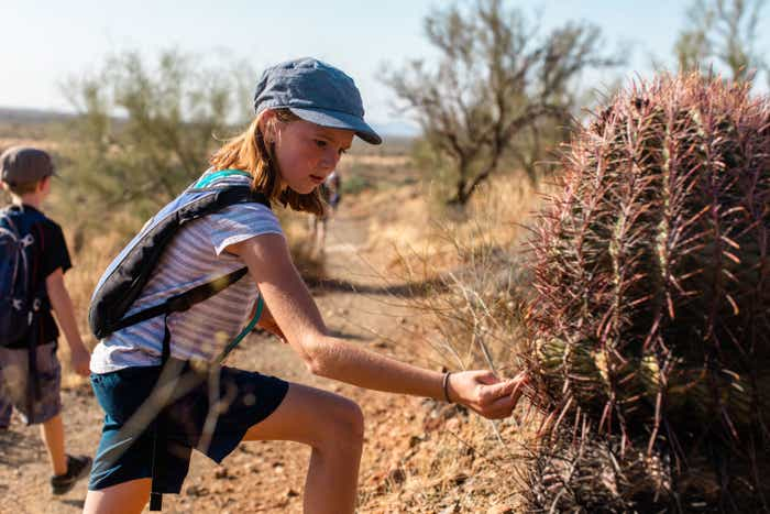 Jessica Averett's daughter cautiously observes one of the various cacti breeds.