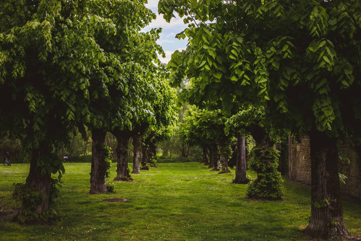 Two rows of trees line a grassy area.