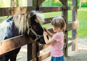 Young child petting a brown horse behind a fence