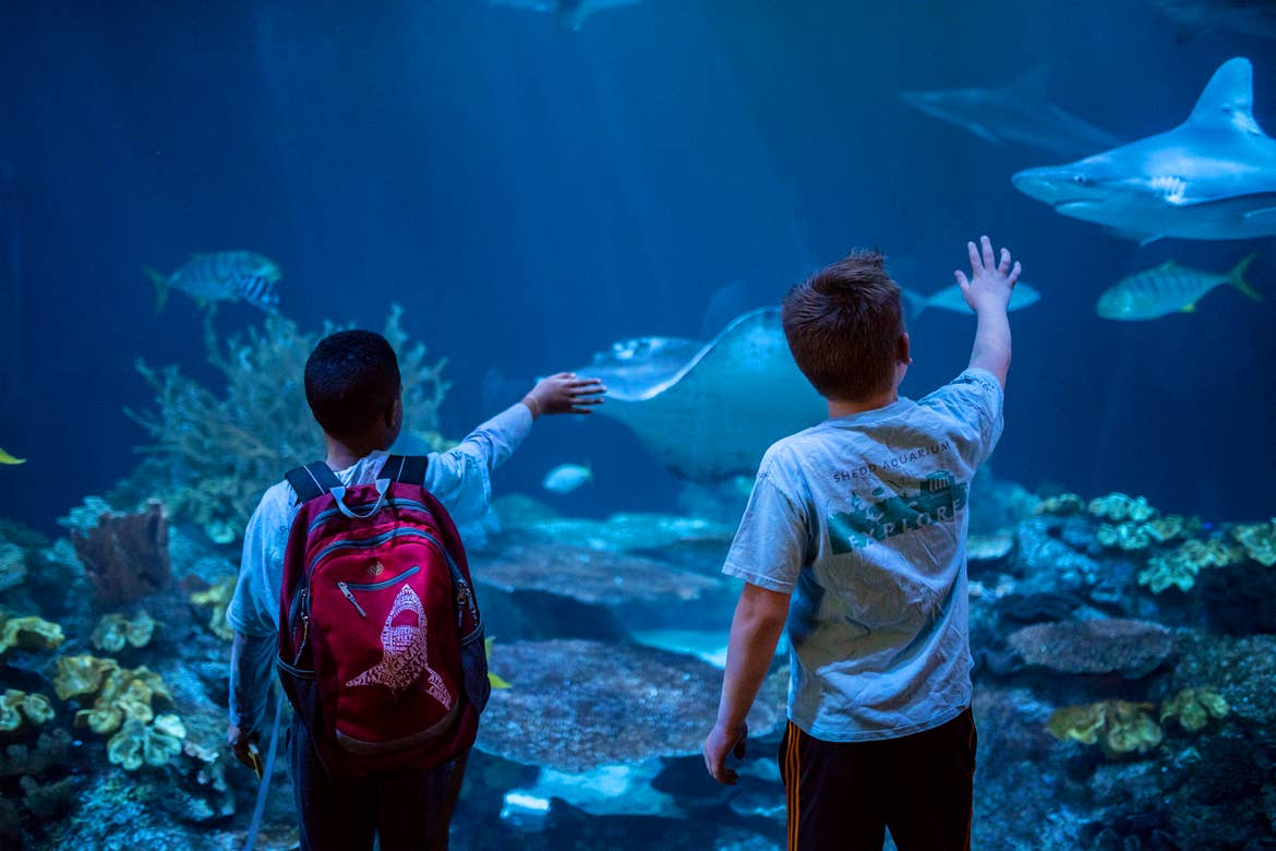 Two young boys touch the glass at an aquarium.
