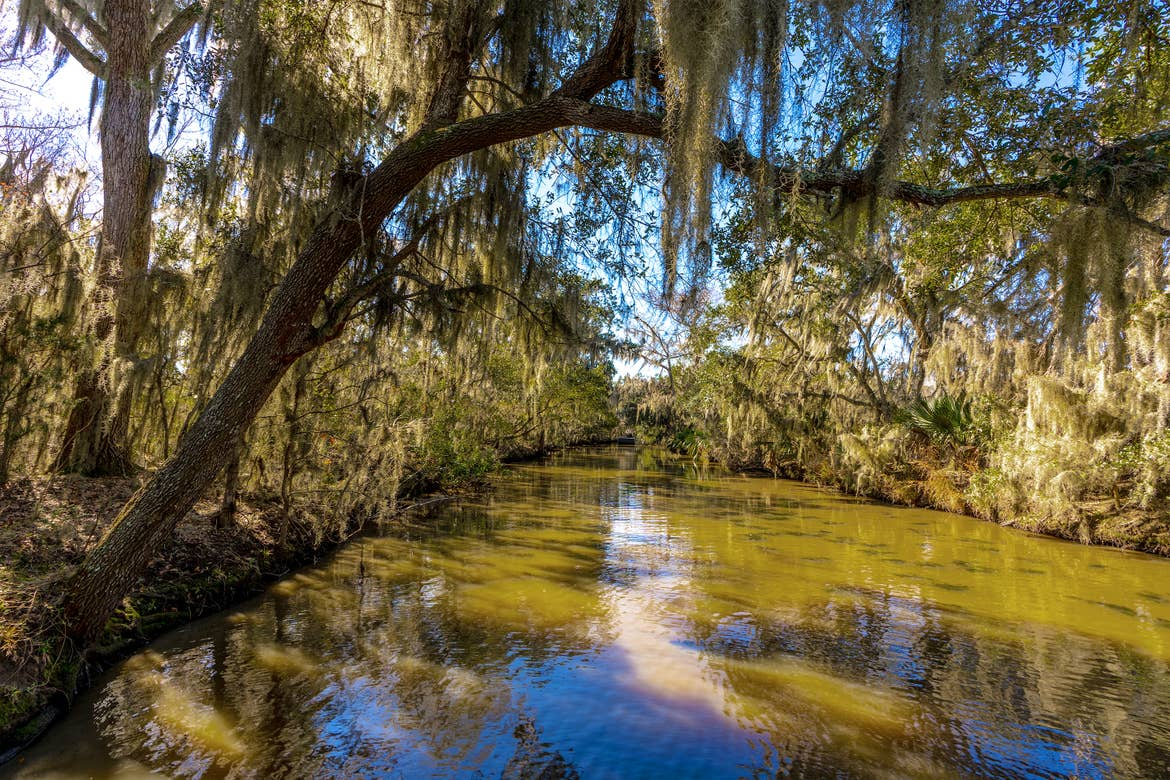 A mossy tree hangs over the bayou under a blue sky.