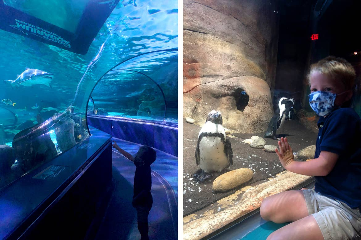 Left: Brianna's two children wear safety masks while walking through the aquatic tunnels at Ripley's Aquarium of Myrtle Beach. Right: Brianna's son wears a mask as he observes the penguin enclosure.