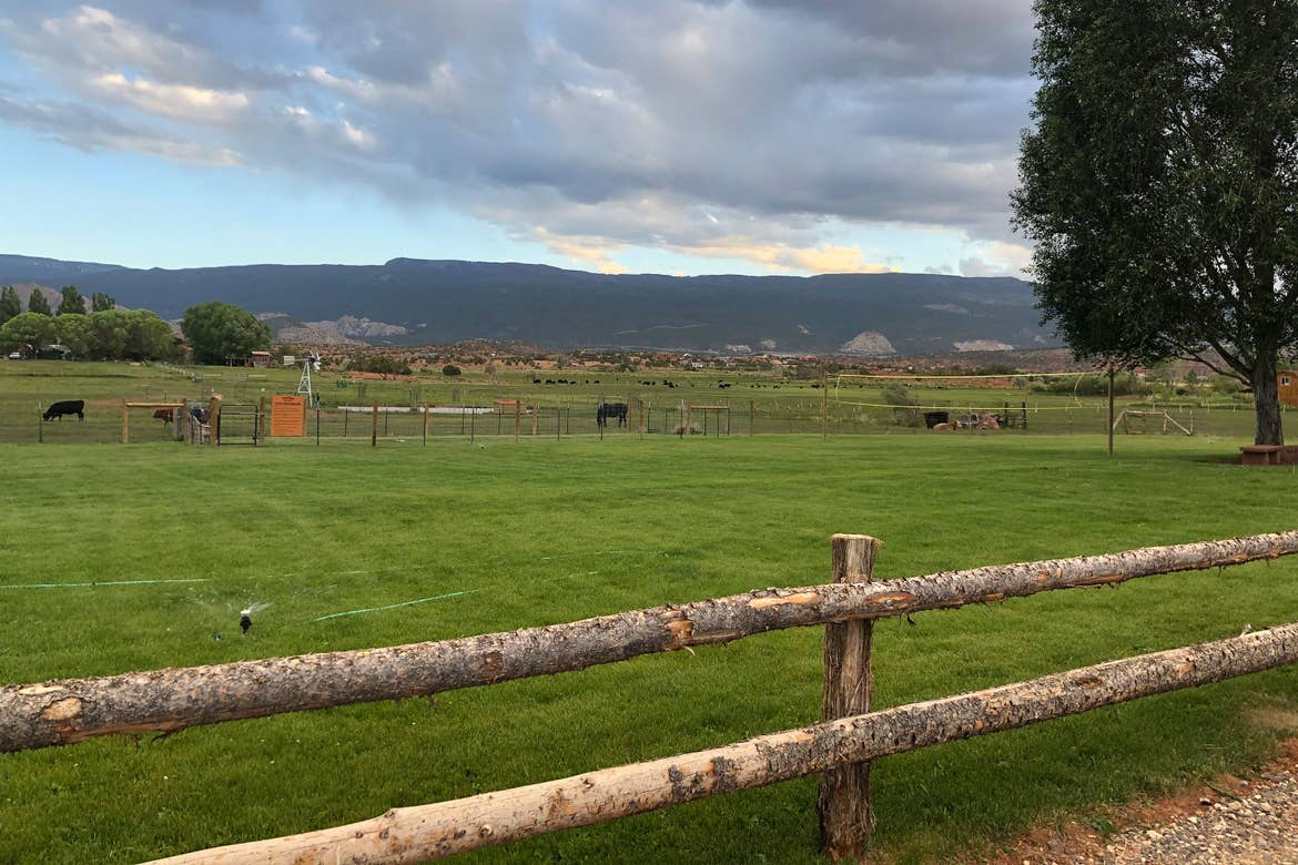 A view of the cow pasture at Wonderland RV Resort.