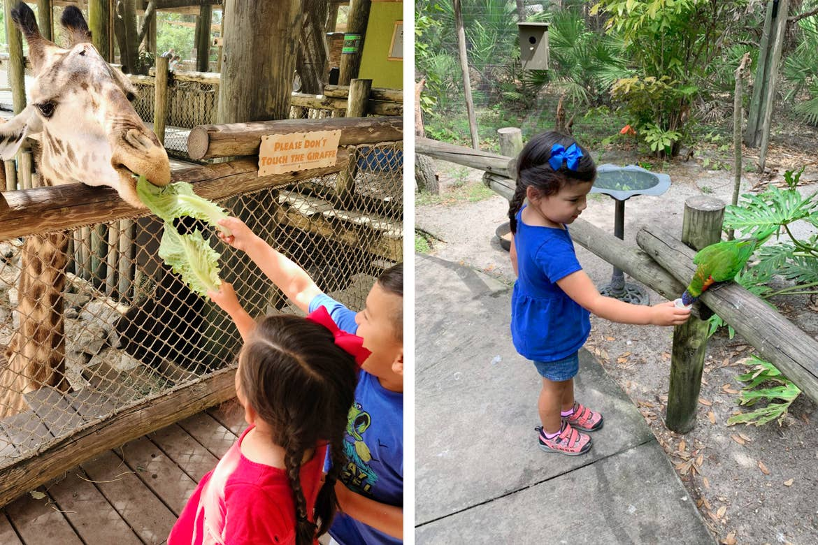 Left: Angelica Kajiwara's son and daughter feed a giraffe lettuce. Right: Angelica's daughter feeds a Lorikeet.